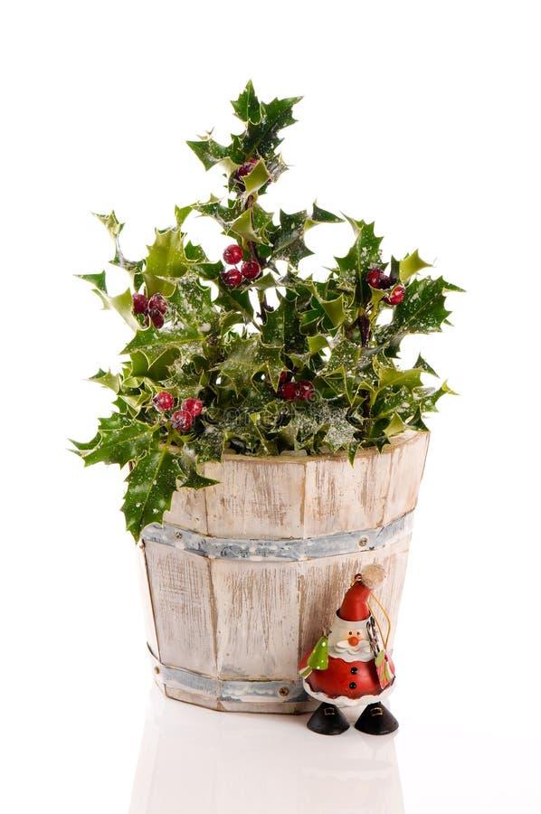 festlig järnek för buske arkivbild