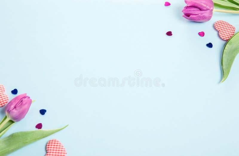 Festlig purpurfärgad rosa blommatulpansammansättning på blå bakgrund Över huvudet bästa sikt, lekmanna- lägenhet royaltyfri foto