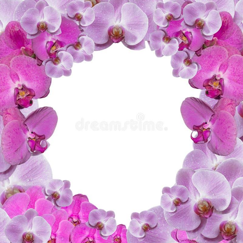 Festlig ram med orkidér stock illustrationer