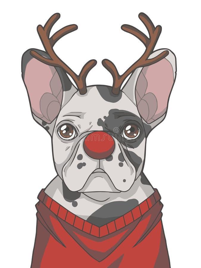 Festlig svartvit pied hunduppklädd för fransk bulldogg som julren med horn på kronhjort och grafisk vektorillustra för röd näsa royaltyfri illustrationer