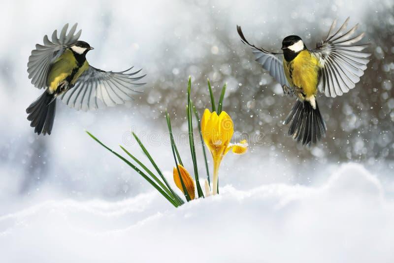 Festliga flyger den lilla fågeln för vykort två gärdsmygen brett spritt den royaltyfri bild