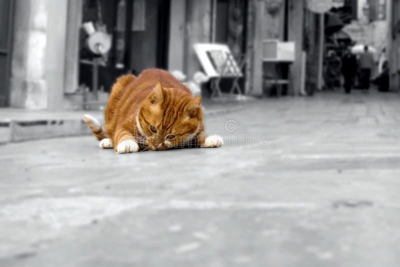 Fet röd katt - Fette rote Katze arkivbild
