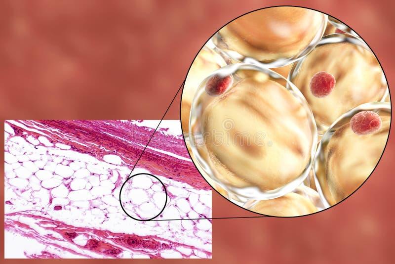 Feta celler, micrograph och illustration 3D royaltyfri fotografi