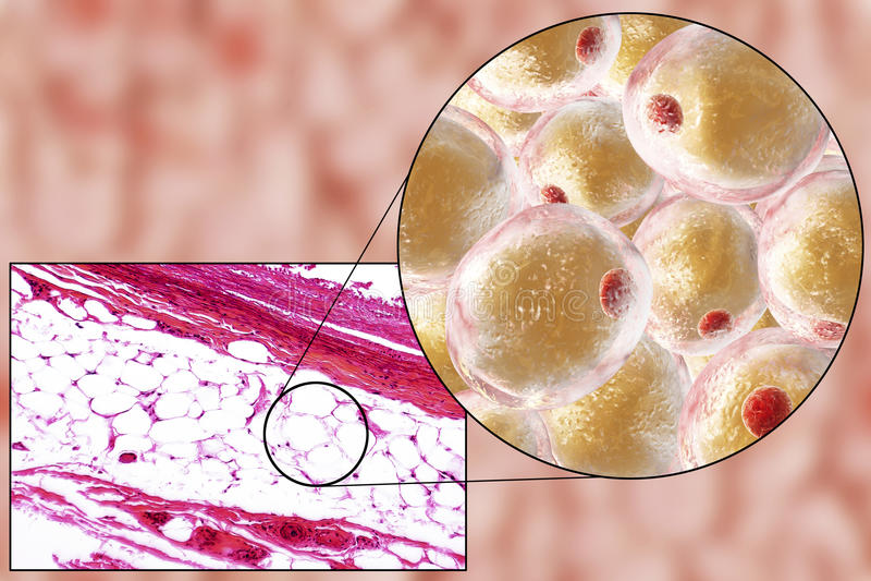 Feta celler, micrograph och illustration 3D fotografering för bildbyråer