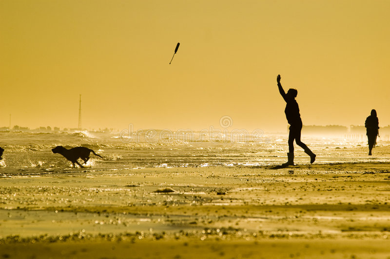 Download Fetch stock photo. Image of ocean, toss, owner, sunset - 6163464
