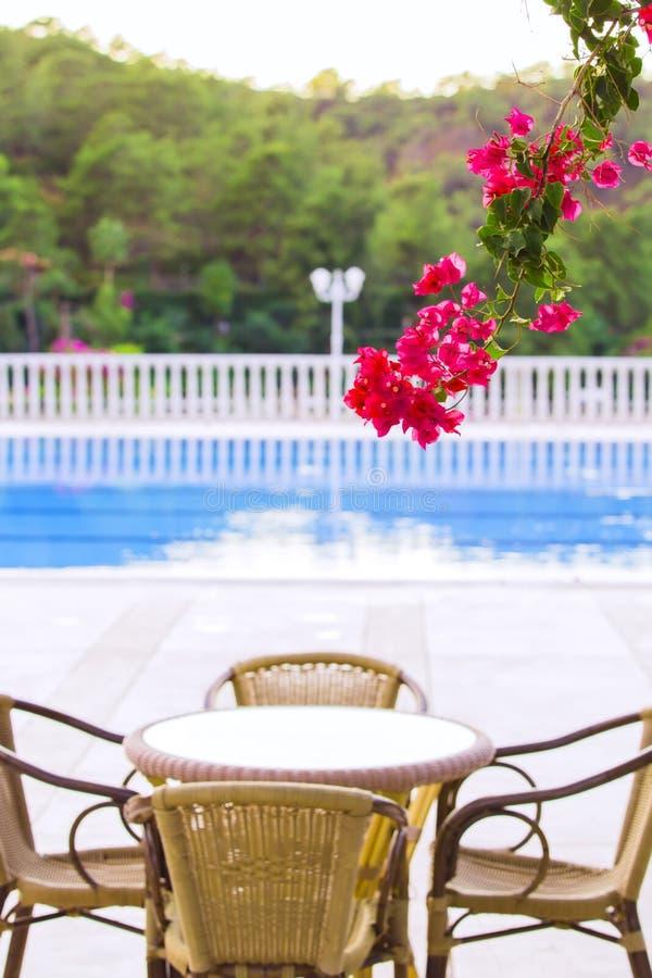 Fethiye, Turquía, septiembre de 2017 Hotel de gran altura cómodo Flores magentas de la buganvilla de la rama en la piscina azul,  fotos de archivo