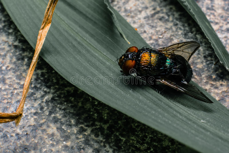 Fett-Fliegen stockbild