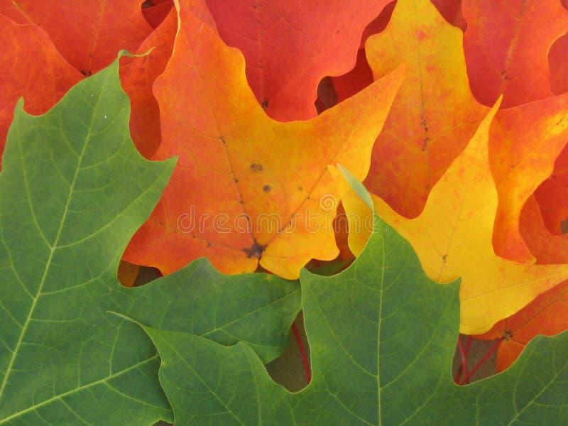 Download Fett u. schön stockfoto. Bild von regenbogen, fall, park - 29062