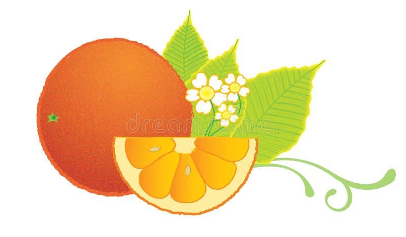 Fetta arancione illustrazione di stock