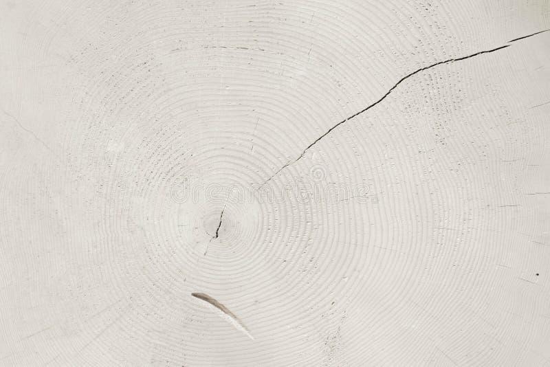 Fetta con gli anelli, sfondo naturale tonificato bianco dell'albero immagini stock