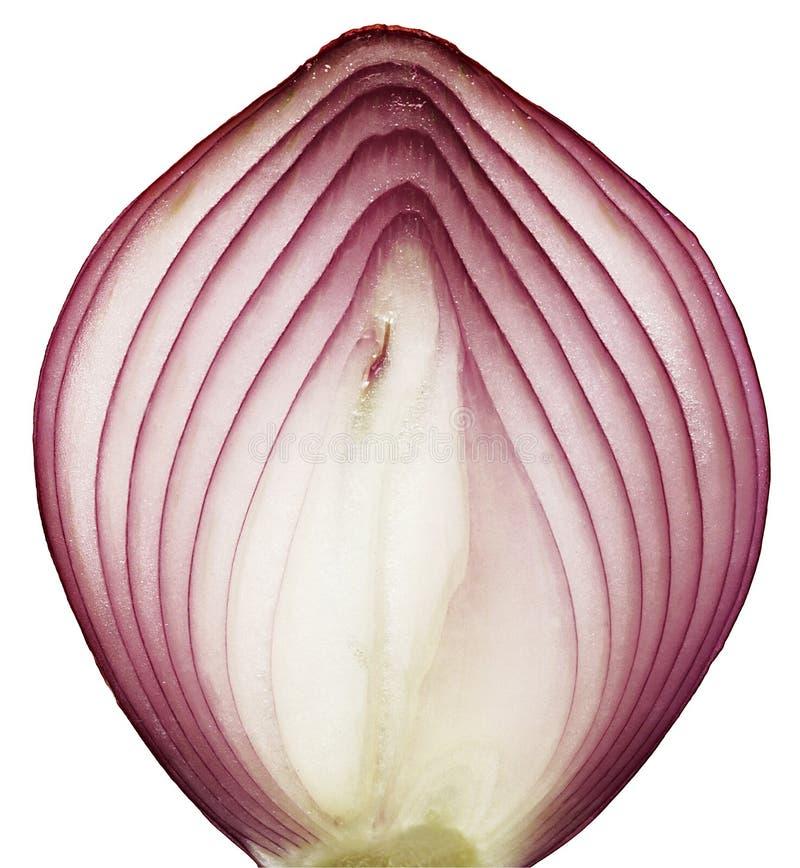 Fetta della cipolla immagine stock