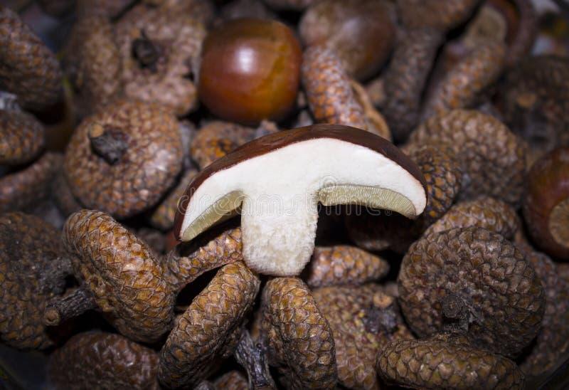Fetta di fungo bianco fotografia stock