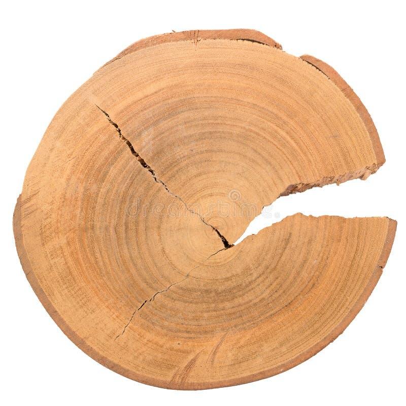 Fetta di legno del ceppo fotografie stock libere da diritti
