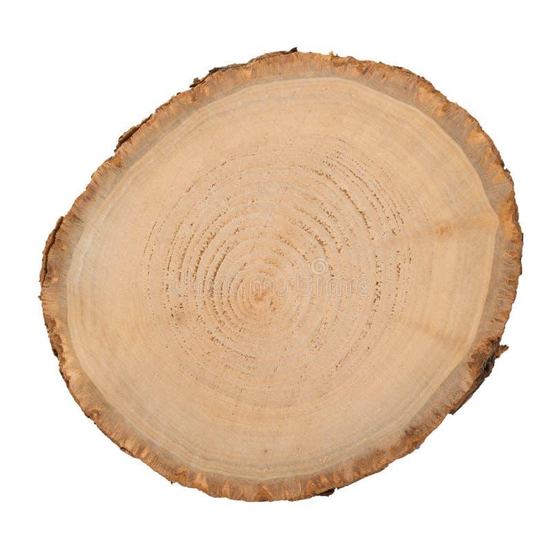 Fetta di legno del ceppo fotografia stock