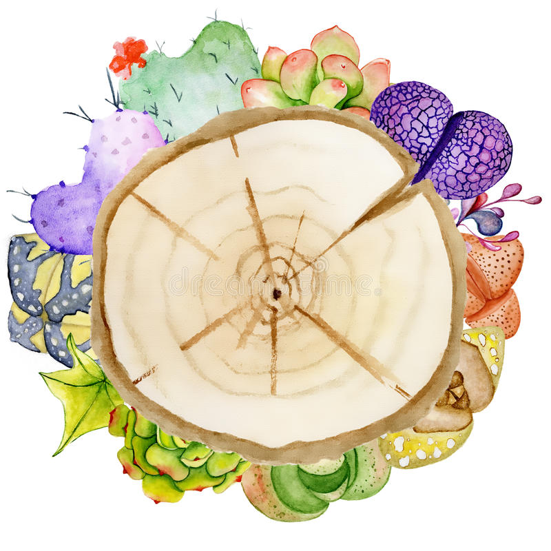 Fette di legno dell'acquerello dipinto a mano circondate dal cactus e dalla crassulacee illustrazione di stock
