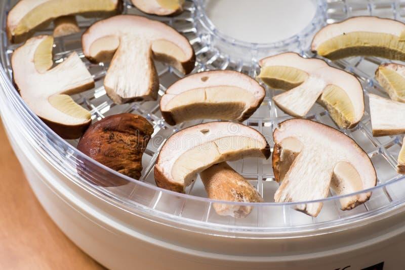 Fette di Porcini in un disidratatore domestico immagine stock