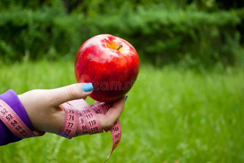 Fette Frauennahaufnahme der rechten Hand hält einen großen roten Apfel stockfoto