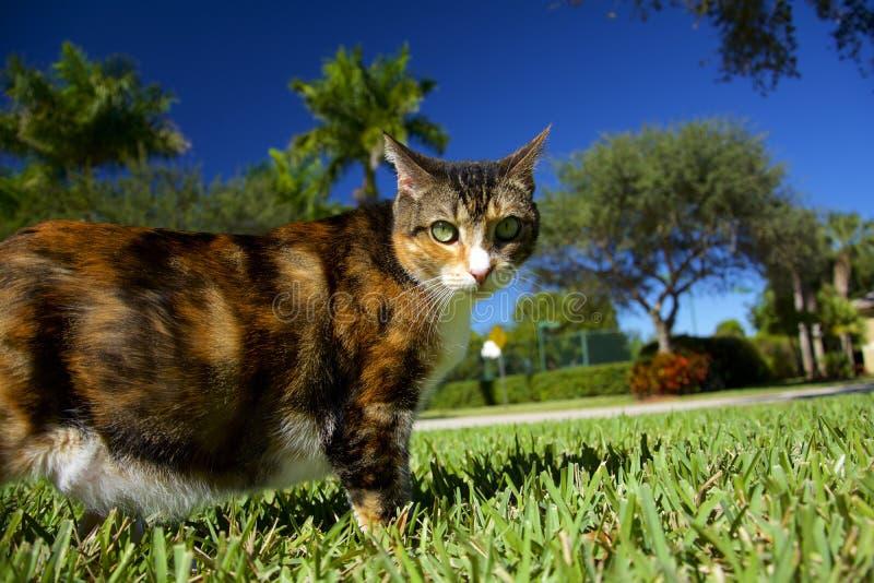 Fette Katze stockbild