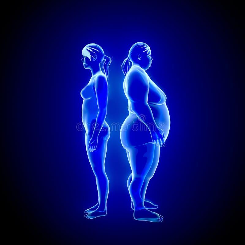 Fette und dünne Frau stock abbildung