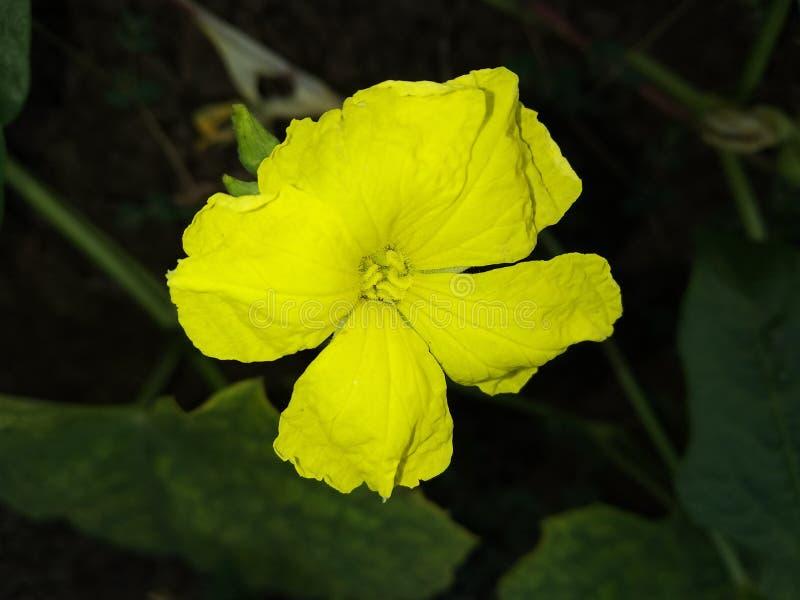 Fetten Sie Blume im Bauernhof ein stockfotografie