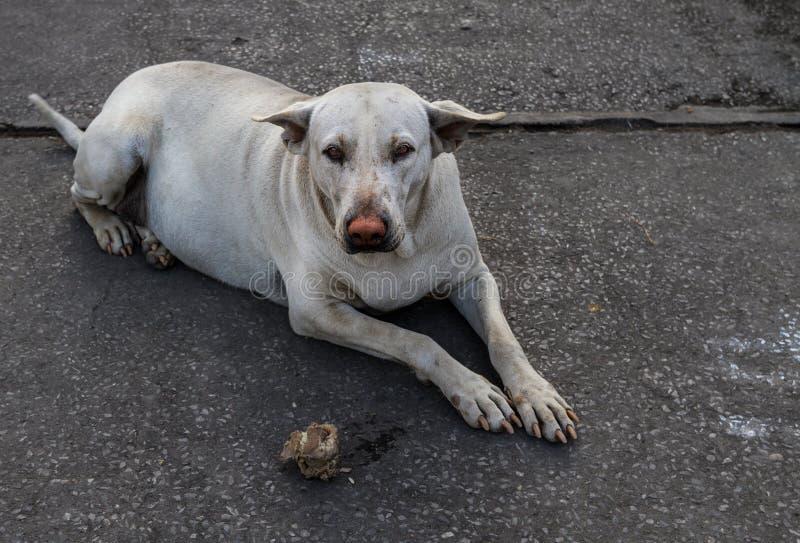 Fetter Straßenhund mit roter Nase als Clown lizenzfreie stockbilder