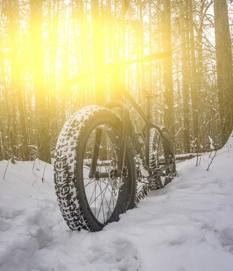 Fettes Fahrrad im schneebedeckten Wald stockfotos