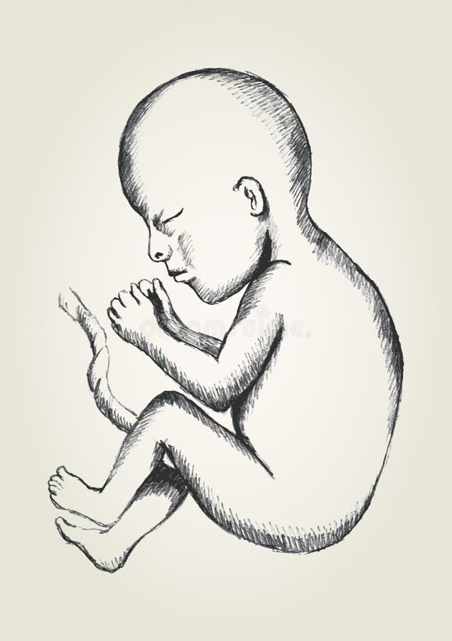 fetus ilustração royalty free
