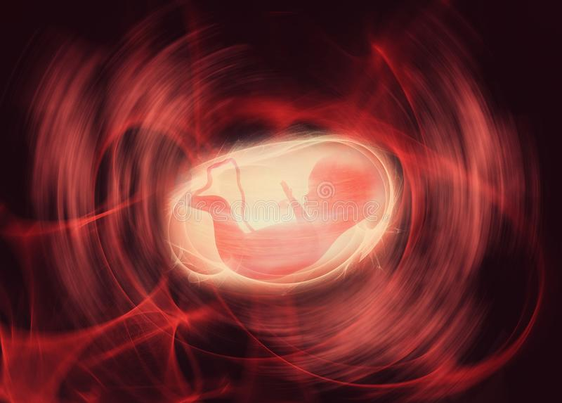 Fetus in the womb. Image of a fetus in the womb stock illustration