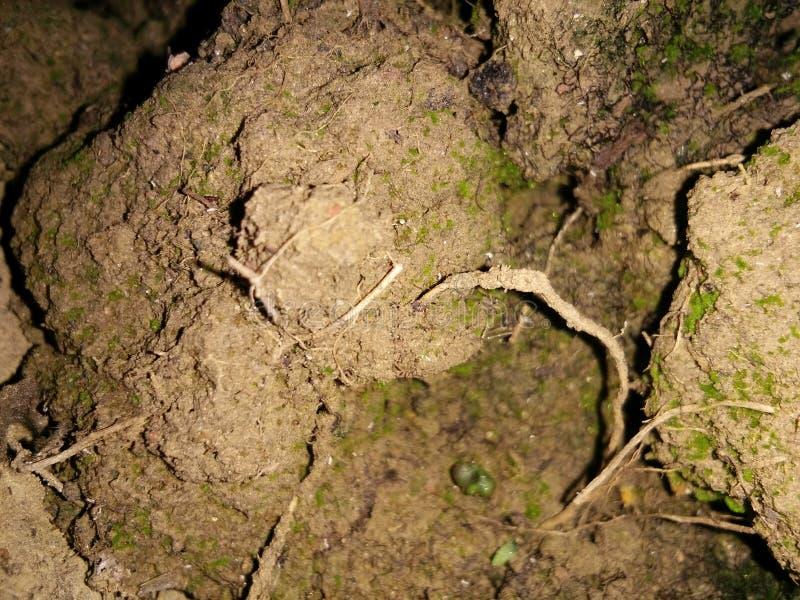 Feuchter Boden stockbilder