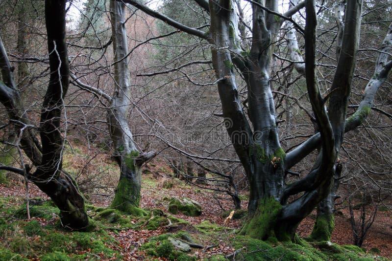 Feuchter Wald stockbilder