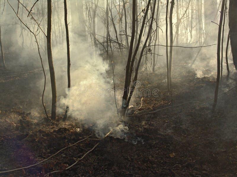Feuer. lizenzfreies stockfoto