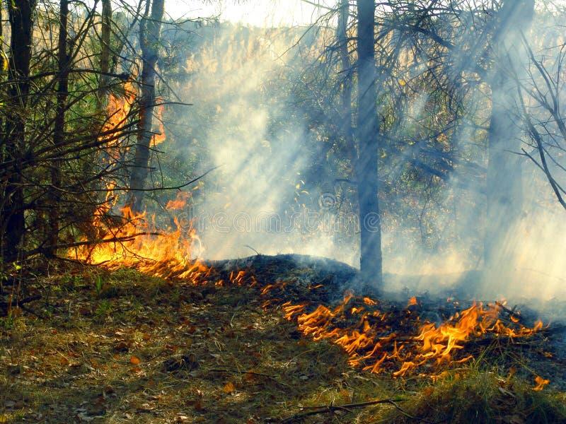 Feuer. stockfoto