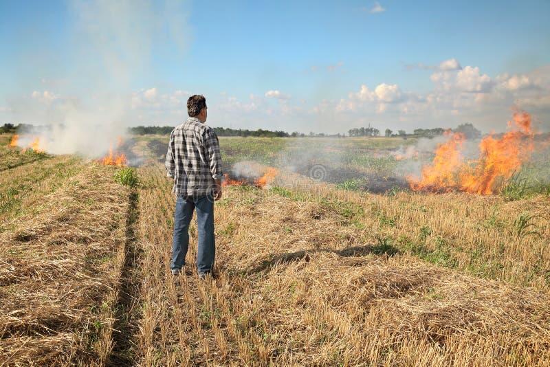 Feuer auf dem Gebiet lizenzfreie stockfotografie