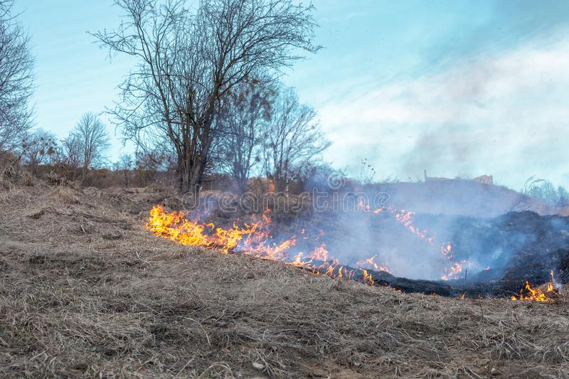 Feuer auf dem Gebiet Brennendes trockenes Gras nahe Wald nach Winter lizenzfreies stockbild