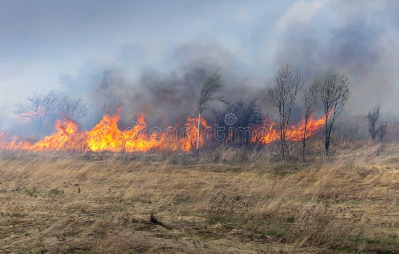 Feuer auf trockenem Gras und Bäumen stockbild