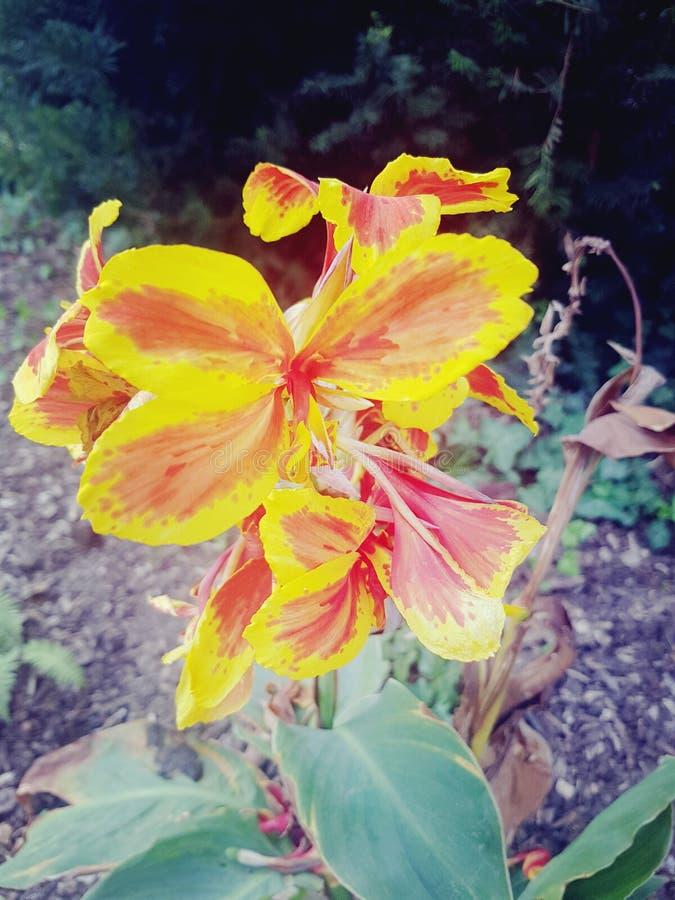 Feuer Blume arkivfoto