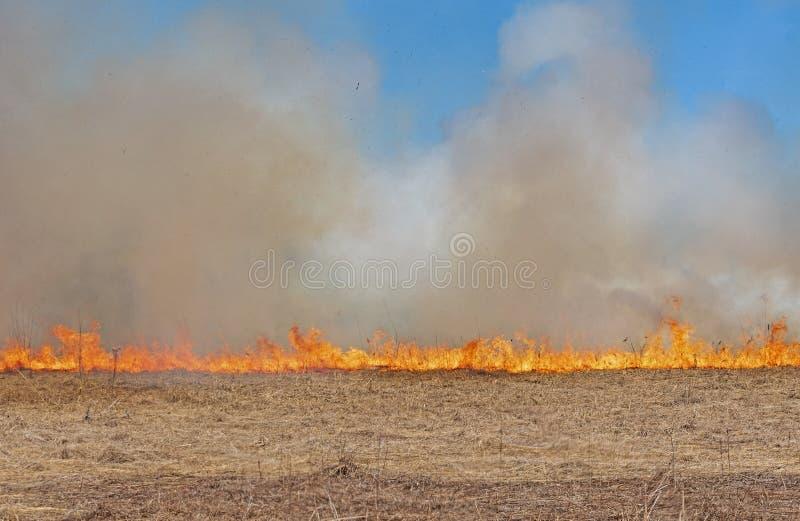 Feuer, das über das Grasland weiterkommt lizenzfreies stockfoto