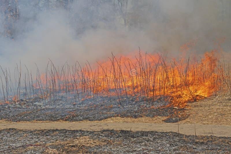 Feuer, das durch das Prarie-Gras sich bewegt stockfotos