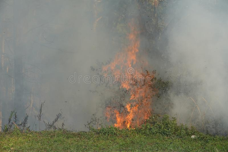Feuer in der Kiefer forrest stockfotografie