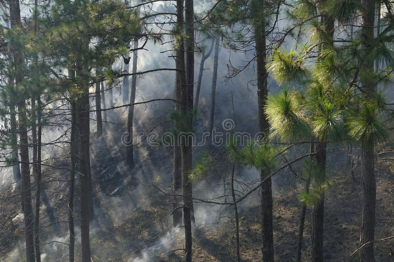 Feuer in der Kiefer forrest stockfoto