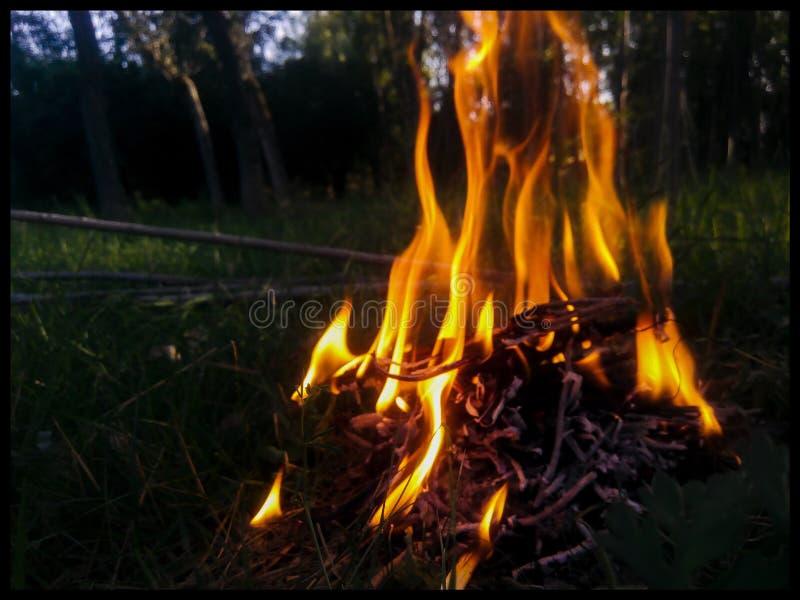 Feuer in der Natur stockbild
