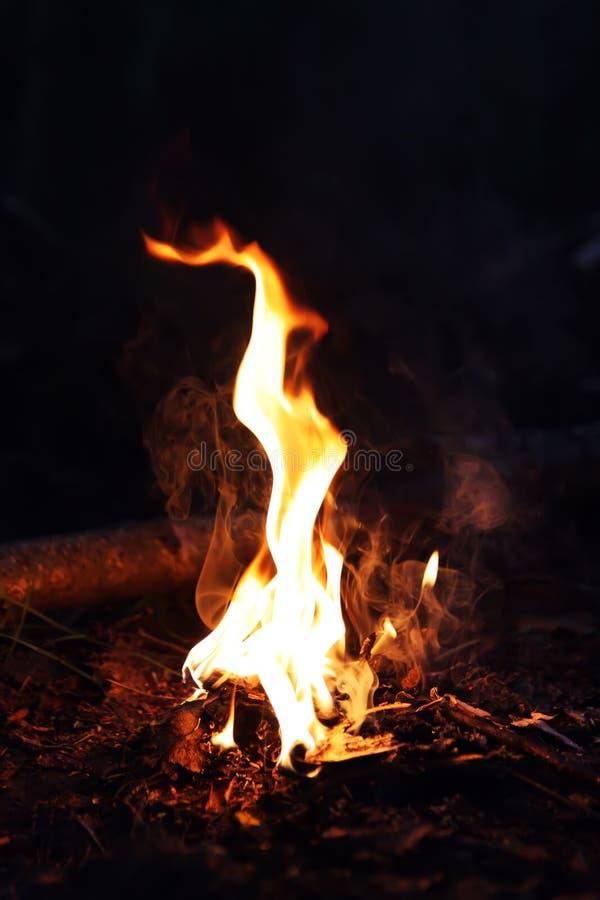 Feuer in der Waldflamme nachts lizenzfreies stockbild