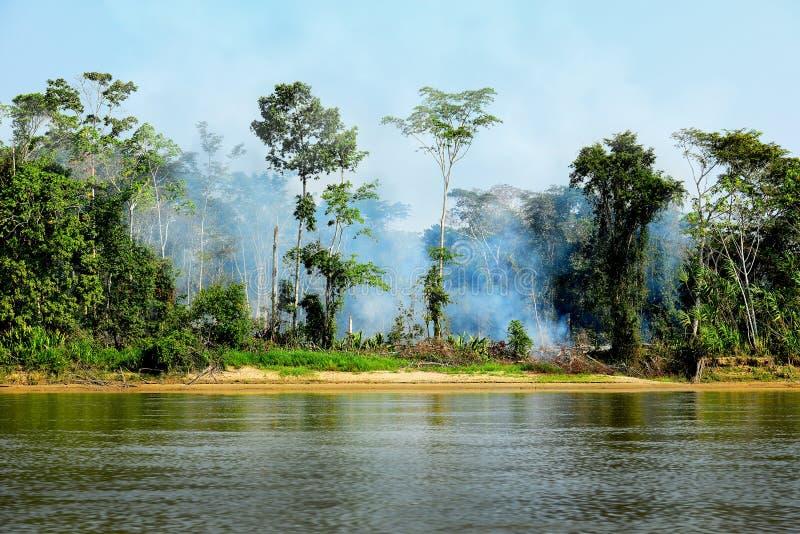 Feuer in einem Dschungel stockbild
