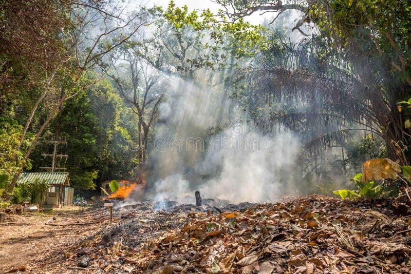 Feuer in einem tropischen Wald wegen des hei?en Klimas viel Rauch und Asche, der Strahlnschnitt der Sonne durch die B?ume stockfoto