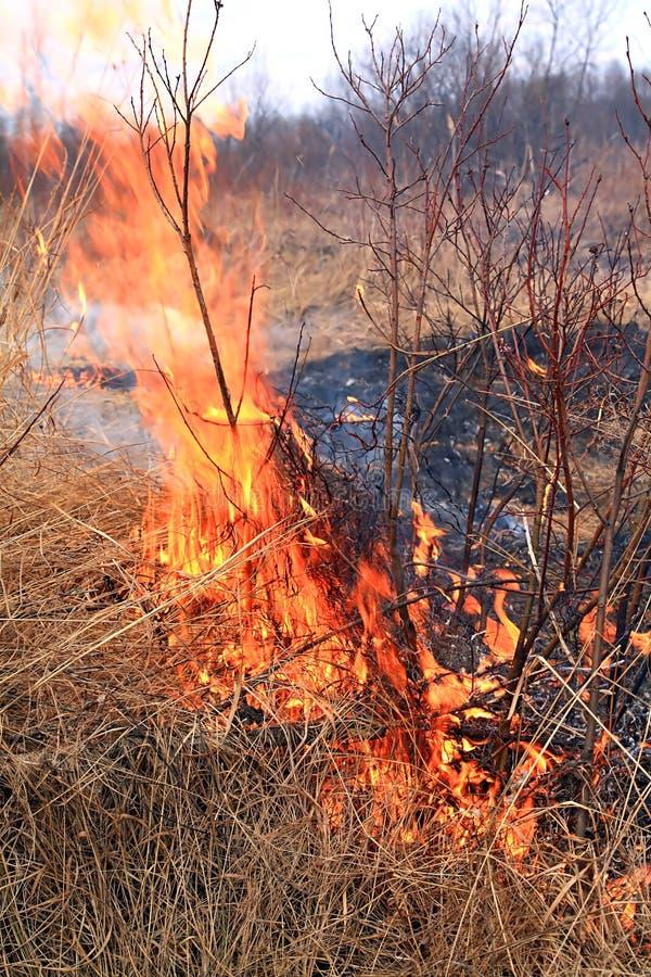 Feuer im Kraut lizenzfreie stockfotografie