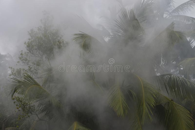Feuer im Regenwald Wald im Rauche Rauch lief herein aus stockfotos