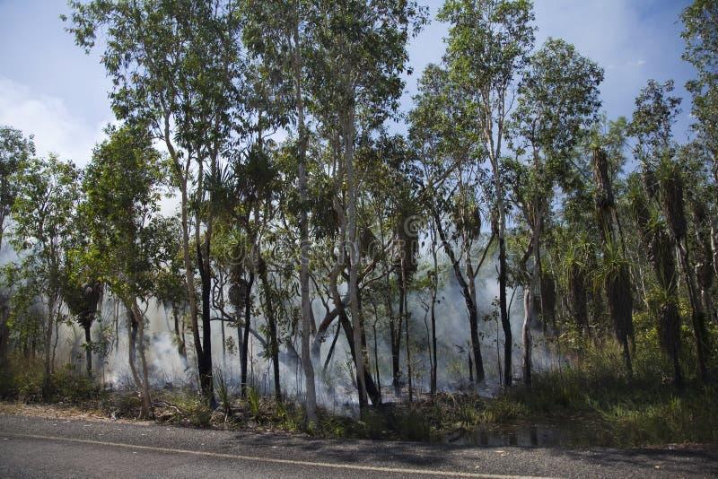 Feuer im Wald lizenzfreies stockbild