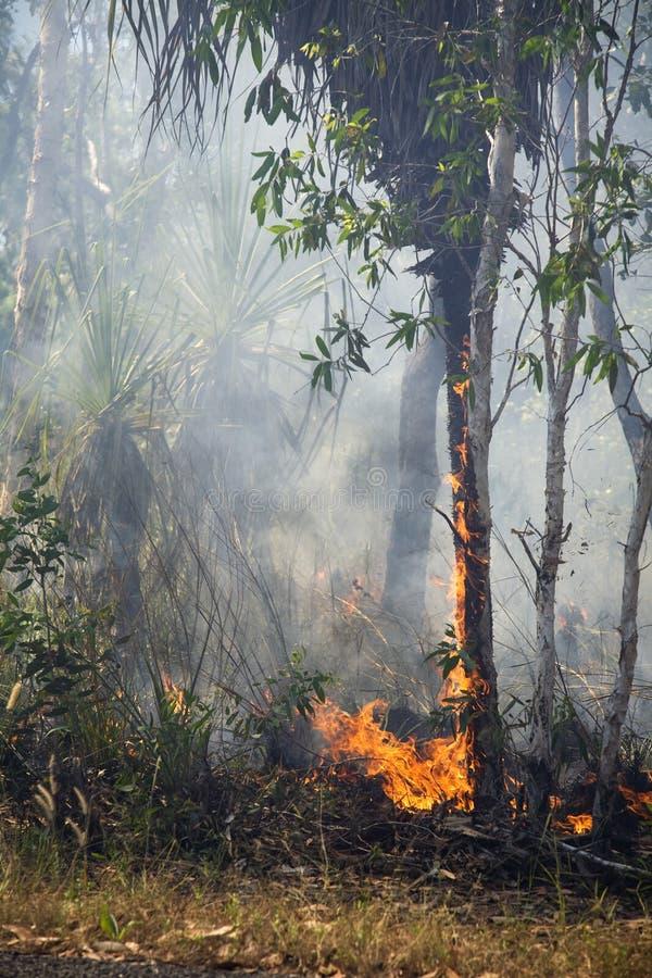 Feuer im Wald stockbilder