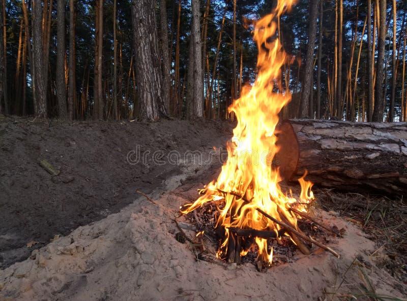 Feuer im Wald lizenzfreie stockfotografie