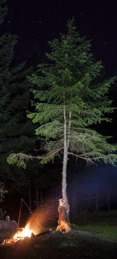 Feuer nachts mit Fliegen funkt nahe einsamer Kiefer lizenzfreies stockfoto